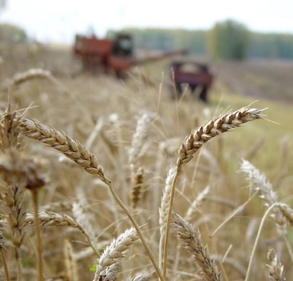 Возобновит ли Россия экспорт зерна за границу?